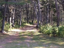 Meandering driveway to the log cabin.